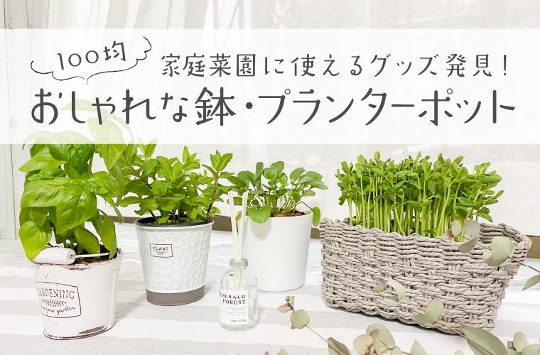家庭菜園に使える簡単100均グッズ♪ダイソーやセリアのおしゃれな鉢やプランターポットを紹介!