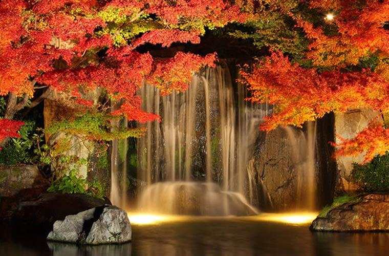 【姫路】「好古園」の紅葉はライトアップがおすすめ♪姫路城とセットで入場料がお得に!