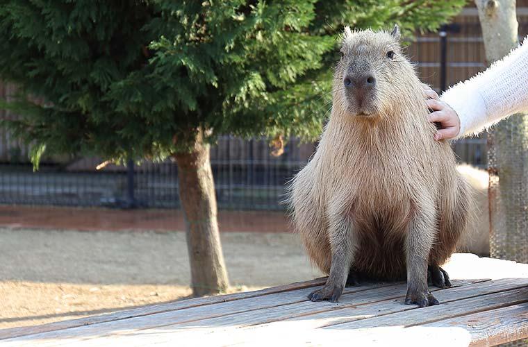 今度の休みは赤穂海浜公園の タテホわくわくランドと動物ふれあい村へ!