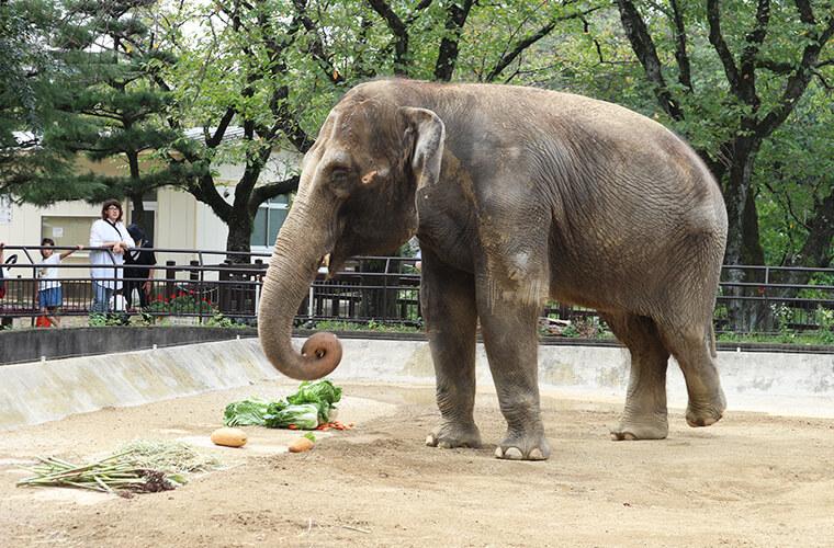 【姫路動物園】アクセス・開園時間・入園料金までまるわかり!周辺おでかけスポットも♪