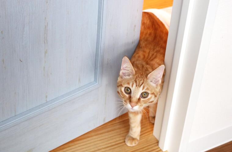 【高砂】猫カフェ「Marble CAFE(マーブルカフェ)」20匹の猫に充実の食事メニューも♪