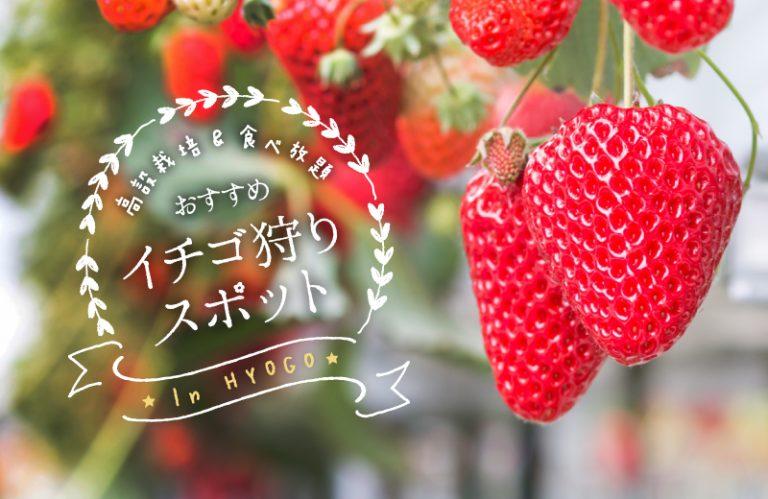 【2020】兵庫・姫路周辺のいちご狩りおすすめスポット14選!高設栽培&食べ放題!
