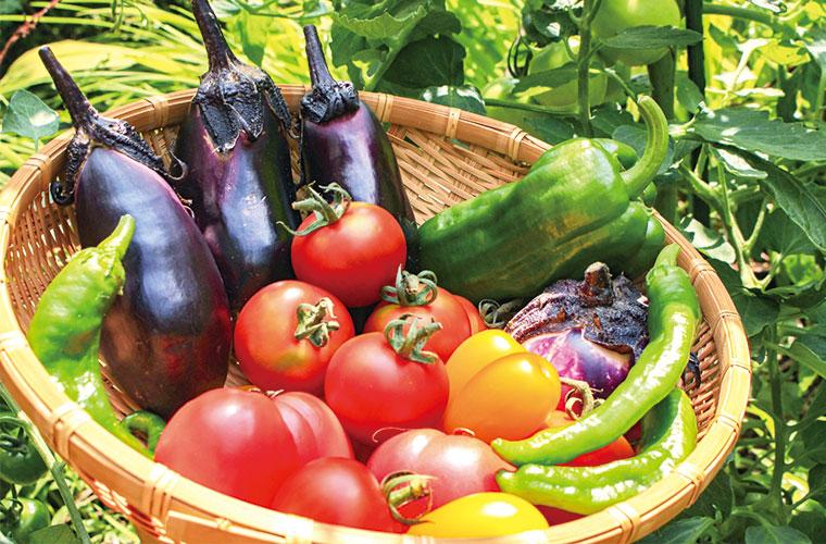 1年間の農業体験が無料!余暇を楽しみたい人や農作物を作りたい人は必見です!