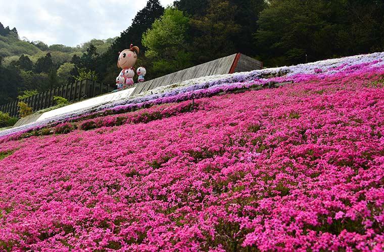 姫路の花の名所!ヤマサ「芝桜の小道」インスタ映えスポット(2021)