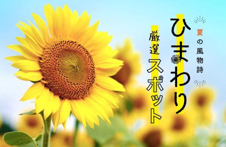 年に一度の絶景スポット!兵庫県のひまわり畑9選!気になる見頃も紹介♪(2020)