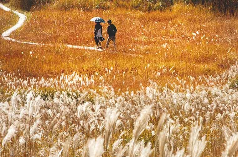 【神河】ススキだけじゃない!砥峰高原は楽しみが盛りだくさん!周辺おすすめスポットも♪