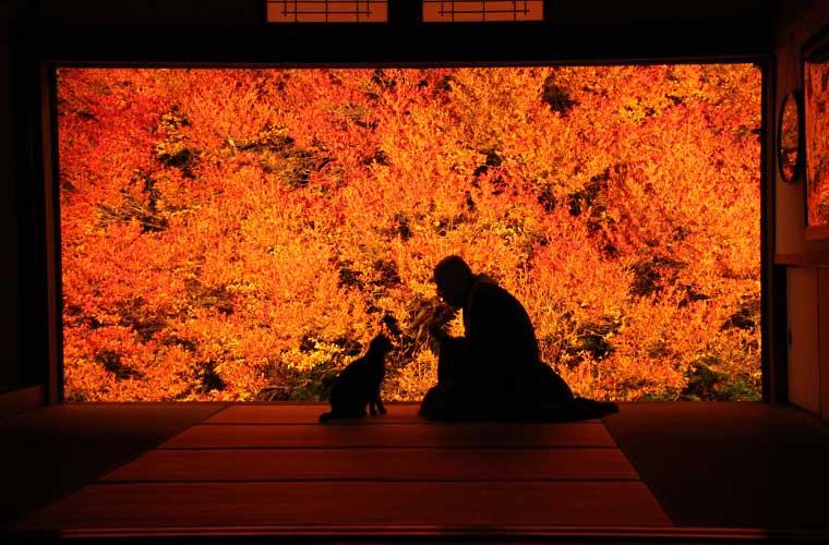 【お寺巡りの楽しみ方~紅葉編~】兵庫県の隠れた名所や話題のスポットを9カ所紹介!