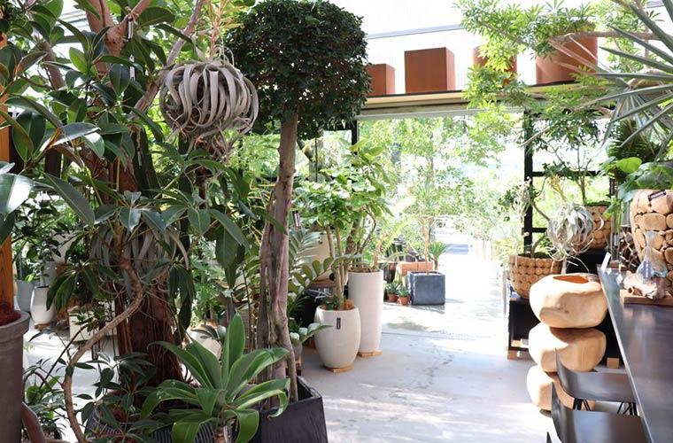 【姫路】おしゃれなセレクトショップ「フィールザグリーン」観葉植物&庭木がずらり!