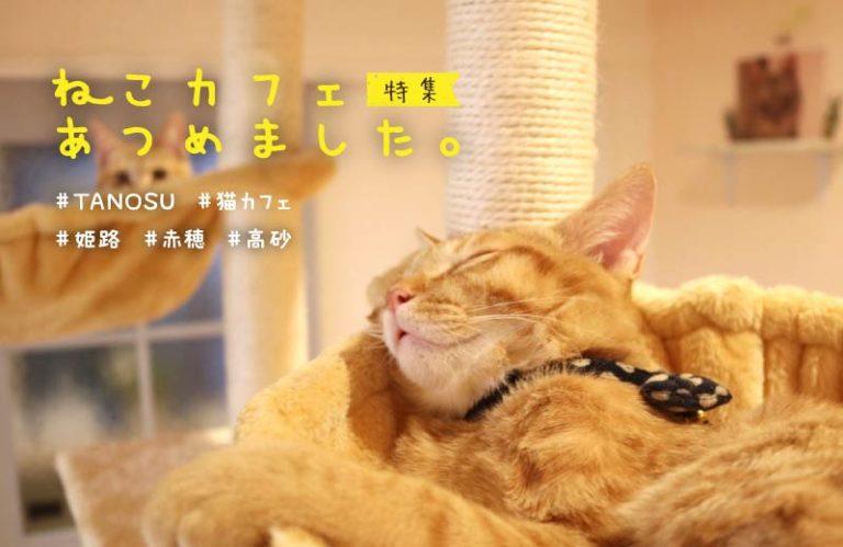 【姫路・加古川・高砂】人気の猫カフェ5選!料金やシステムを紹介♪猫好きの人におすすめ!