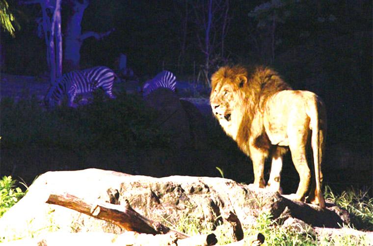入場無料!1日限定の「姫路動物園ナイトzoo」で夜の動物園を体験しよう!