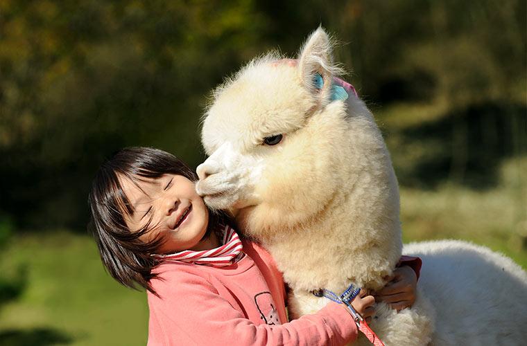 【神河町】「神崎農村公園ヨーデルの森」で動物と触れ合おう!開園20周年記念イベントも♪