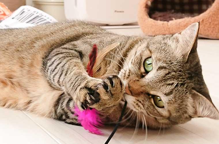 【加古川】「猫カフェnya-go( ニャーゴ)」で癒しのひと時を!かわいい猫クッキーも♪