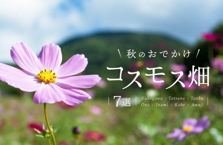 秋のおでかけにおすすめ!兵庫県のコスモス畑7選! 気になる見頃も紹介(2019)