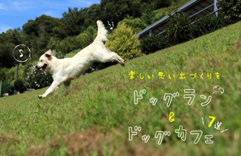 【兵庫県】愛犬とドッグランやカフェが楽しめる、おでかけスポット7選!