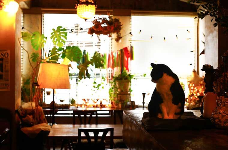 【姫路】彩り豊かなランチが人気の「ブエナビスタ」ネコ店長に癒やされて。テイクアウトも