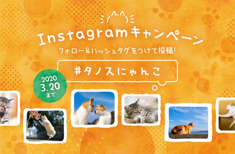 インスタ限定キャンペーン!猫ちゃんの写真大募集♪ Amazonギフト券のプレゼントも!