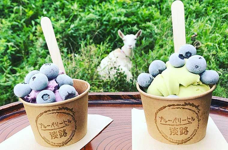 【淡路】「ブルーベリーヒル淡路」オープン!ブルーベリー狩り体験で初夏の味覚を味わって!