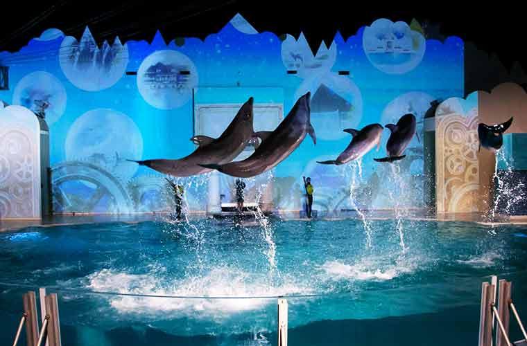神戸市立須磨海浜水族園で「イルカナイトライブ」が4日間限定で復活!