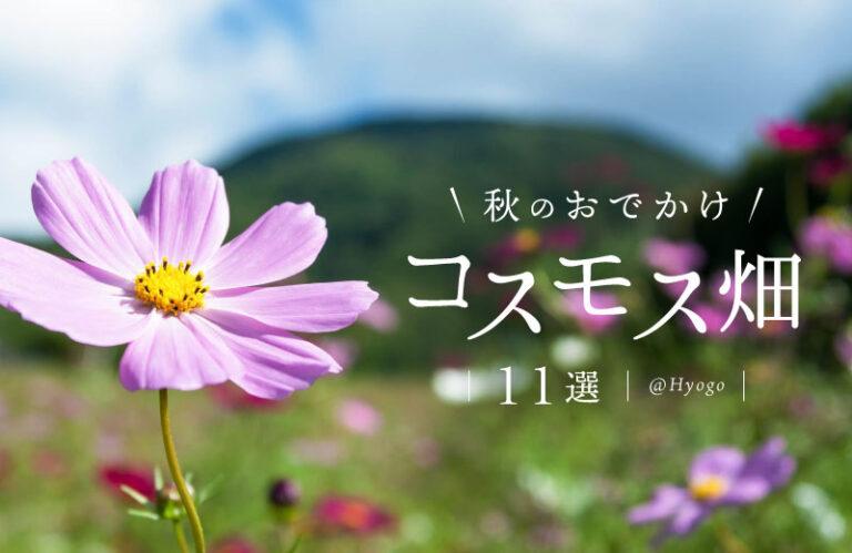 【兵庫県】コスモスの名所11選!見ごろやイベント情報も紹介♪秋のおでかけにおすすめ(2021)