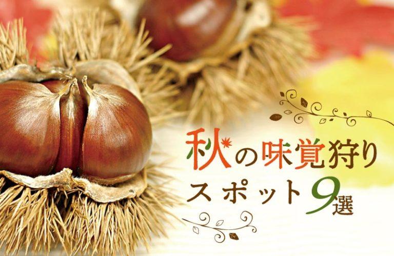 兵庫県の味覚狩りスポット9選(2020) りんごやぶどう、みかん、いちじく、しいたけなど