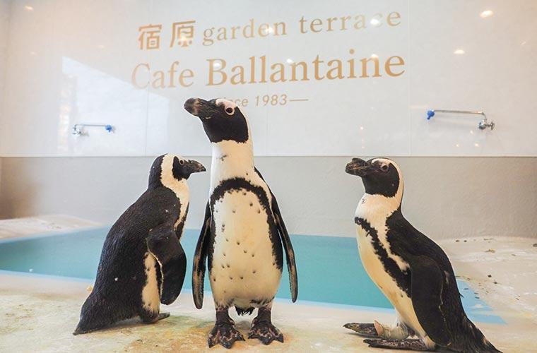【三木】ペンギンに会えるカフェ「バランタイン」でSNS映えスイーツやボリュームランチを♪
