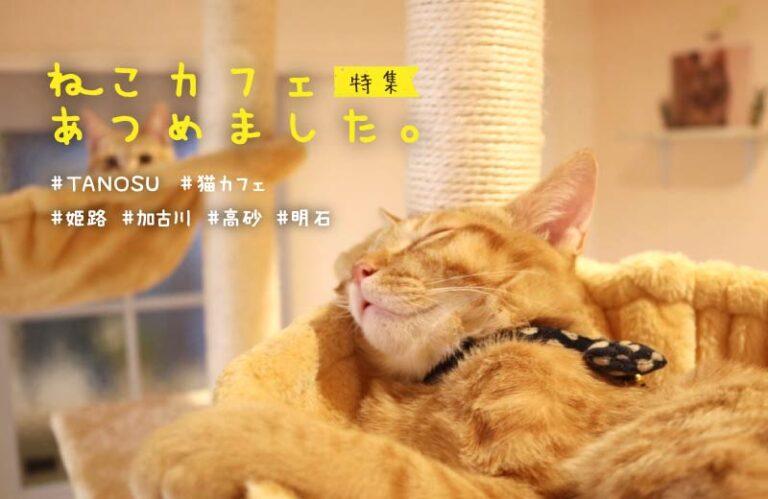 【姫路・加古川・高砂】人気の猫カフェ6選!料金やシステムを紹介♪猫好きの人におすすめ!