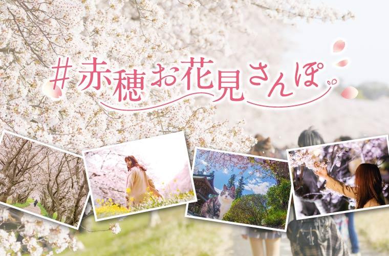 赤穂の桜を楽しもう「#赤穂お花見さんぽ キャンペーン」実施♪Amazonギフト券が当たる!