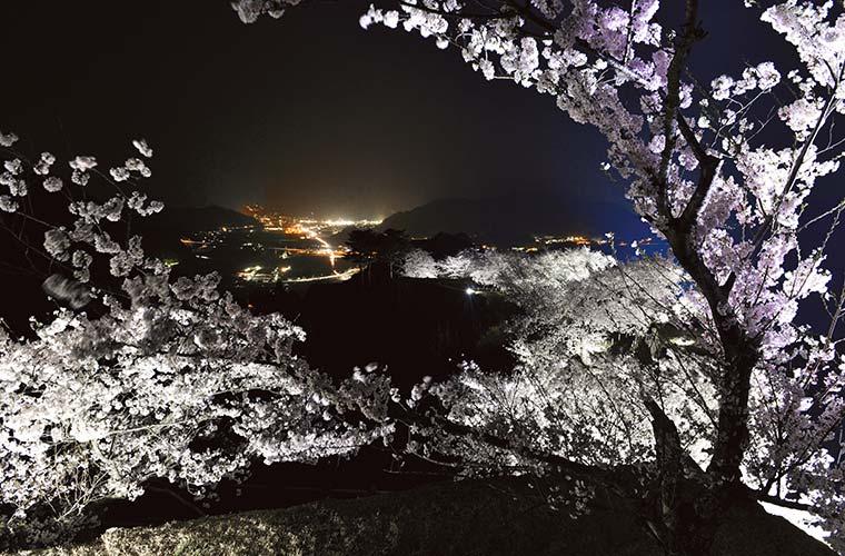 【朝来】竹田城跡で夜桜のライトアップを実施中♪城跡と桜のコラボレーションを楽しんで